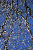 Winter Branches. Snow laden branches in natural daylight Stock Photography