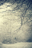Winter Branches Royalty Free Stock Image