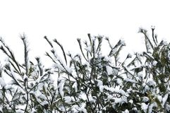 Winter branches Royalty Free Stock Photography