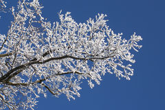 Winter branches Stock Photos