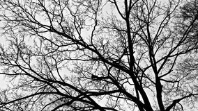 Winter Branches. Against a cloudy sky Royalty Free Stock Photos