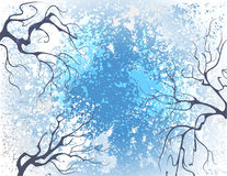 Winter branches Royalty Free Stock Photos