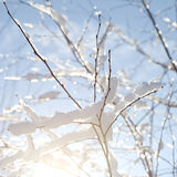 Winter branches Stock Photos