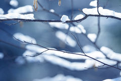 Winter branches covered with snow. Frozen bush branch in winter forest. Background Royalty Free Stock Photos