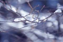 Winter branches covered with snow. Frozen bush branch in winter forest. Background Stock Photos