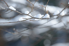 Winter branches covered with snow. Frozen bush branch in winter forest. Background Stock Photography