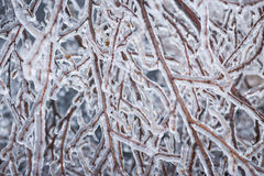 Winter branches in ice Stock Images