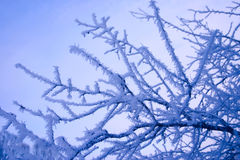 Winter branches of a tree in hoarfrost Stock Images
