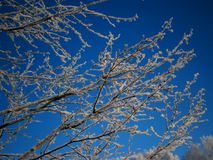 Winter-002 Royalty Free Stock Photos