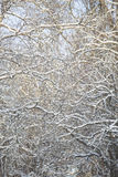 Winter Bransches full frame Royalty Free Stock Images