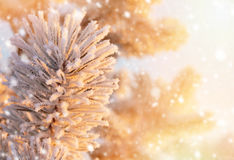Winter bright background. Royalty Free Stock Photo