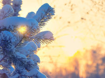 Winter bright background. Stock Images