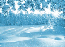 Winter bright background. Royalty Free Stock Image