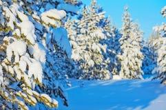 Winter bright landscape. Stock Image