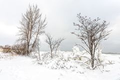 Snow and Ice Laden Branches of Former Bare Trees. Winter is bringing a new look to now snow-covered and ice laden branches along Lake Michigan Royalty Free Stock Photo