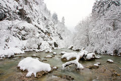 Winter brook Stock Image