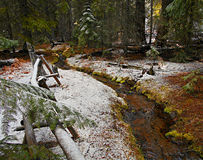 Winter Brook. Late winter forest scene at Black Pine Springs Campground near Sisters, OR royalty free stock photography