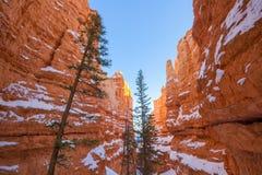 Winter Bryce Canyon lizenzfreie stockfotos