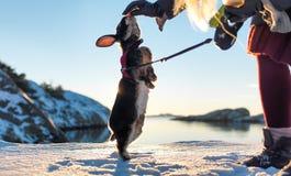 Winter bunny Royalty Free Stock Photography