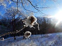 Winter-bur stock photography