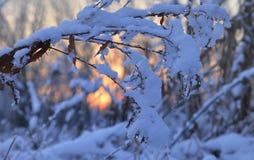 Winter bush Stock Photos