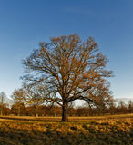 Winter in Bushy Park royalty free stock photography