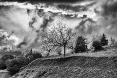 Winter BW photo of cloudy dramatic sky with trees Royalty Free Stock Image