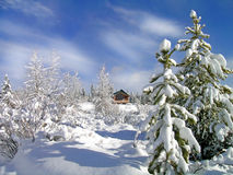 Winter Cabin. Cabin in stand of pine trees covered in snow in the winter Royalty Free Stock Image