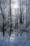 Winter calm frozen landscape with beautiful frosted trees Stock Photos