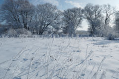 Winter calm frozen landscape with beautiful frosted trees Stock Images