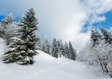 Winter mountain snowy landscape. Winter calm mountain landscape with beautiful frosting trees and footpath track through snowdrifts on mountain slope Carpathian Royalty Free Stock Photography