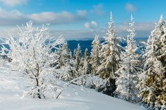 Winter mountain snowy landscape. Winter calm mountain landscape with beautiful frosting trees and snowdrifts on slope Carpathian Mountains, Ukraine Royalty Free Stock Photo