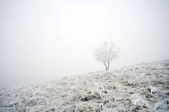 Winter calm mountain landscape Royalty Free Stock Image