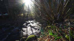 Winter calm river in countryside close-up view. stock footage