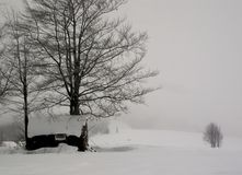 Winter came Royalty Free Stock Image