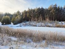 Winter lake in the forest stock image