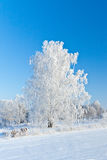 Winter came Royalty Free Stock Photo