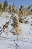 Winter came and snow covered meadows and fields. royalty free stock photography