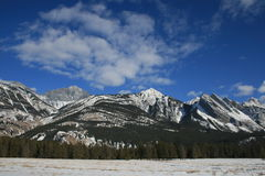 Winter in canada, jasper national park. Jasper national park, alberta, canada, dead frozen forest below the mountains Royalty Free Stock Photo