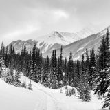 Winter in the Canadian Rockies. Snow shoe trail in Kananaskis in the Canadian Rocky Mountains Stock Images