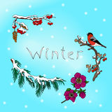 Winter card with bullfinch Stock Photos