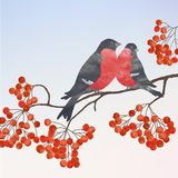 Winter card with bullfinches Royalty Free Stock Images