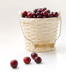 Winter card - Cranberries in bucked shaped vase Stock Photos