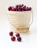 Winter card - Cranberries in bucked shaped vase Royalty Free Stock Photography