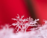 Winter card, photo real snowflakes stock image