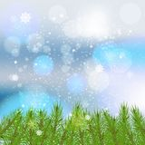 Winter card with snowflakes. Branches spruce underneath Green lush spruce or pine branch. Fir branch, isolated on white background Christmas element Stock Photo