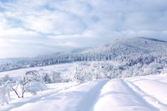 Winter Carpathian landscape royalty free stock photos
