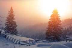 Winter Carpathian landscape Stock Photo