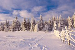 Winter Carpathian landscape Royalty Free Stock Images