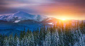 Winter Carpathian landscape Royalty Free Stock Photography